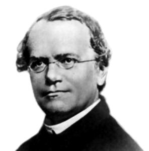 Gregor_Mendel - AndreaLaurel sous licence CC BY 2.0