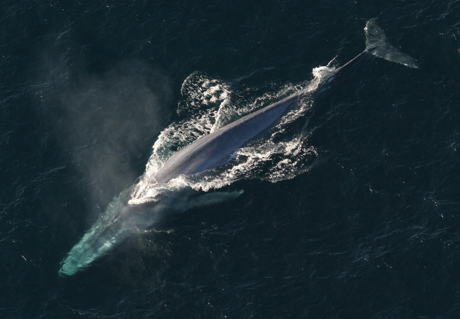 baleine01