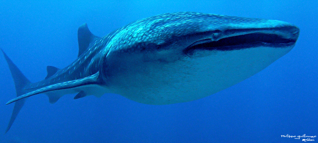 baleine5