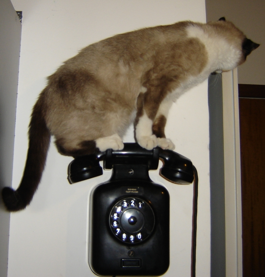 A cat on the phone by Tiz sous licence CC BY-NC-ND 2.0