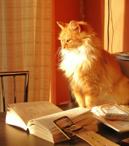 Book cat by raider of gin - sous licence CC BY 2.0
