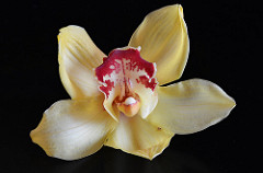 orchidée BY CpaKmoi_CC BY-NC-ND 2.0