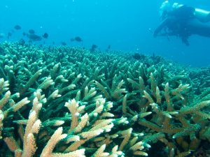 diver-and-coral