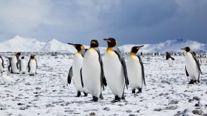 penguin-group-small